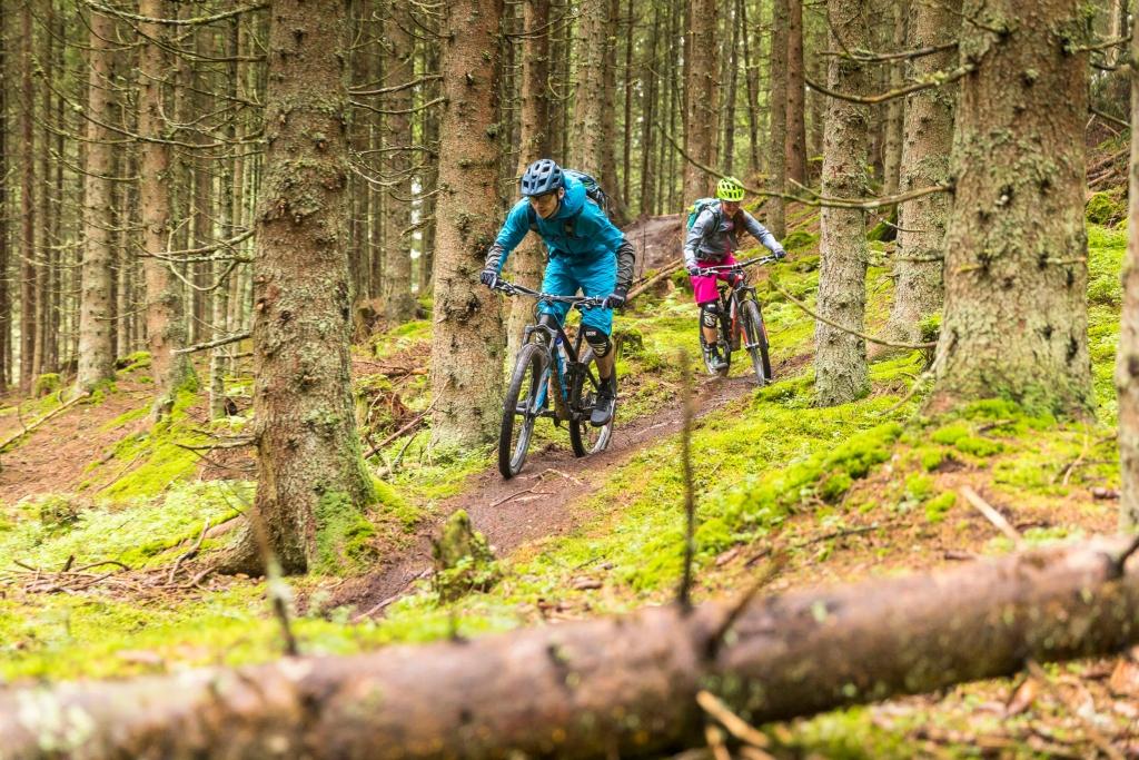 Singletrail durch den Wald - Suntrail in Tirol © WOM Medien