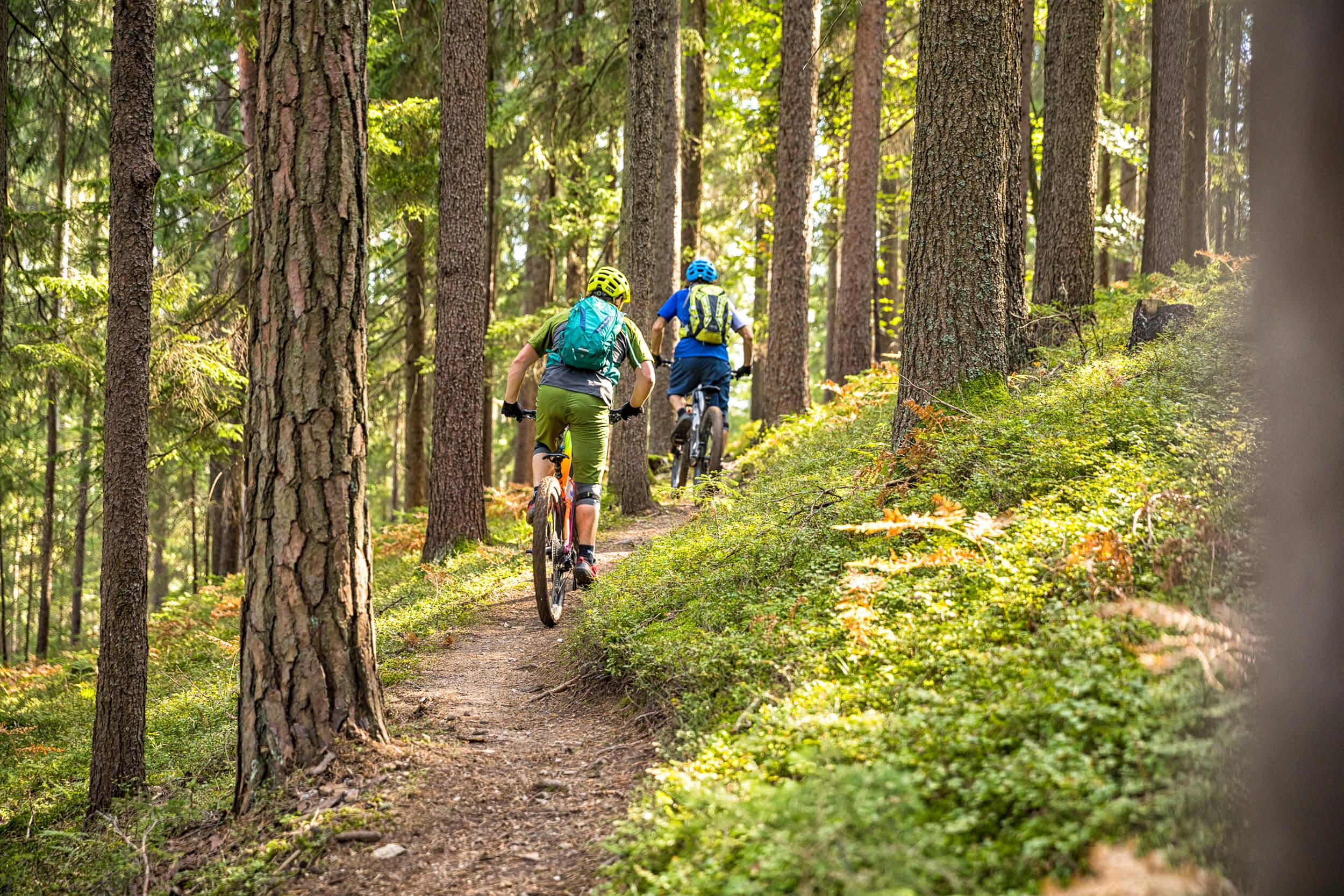 Singletrail durch den Wald im Trailpark Jamnica © WOM Medien